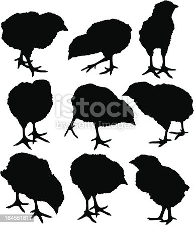 baby chicks stock vector art 164551817 istock