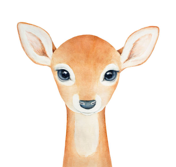 baby deer character portrait. - baby animals stock illustrations