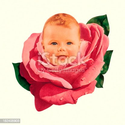 Baby in Pink Rose