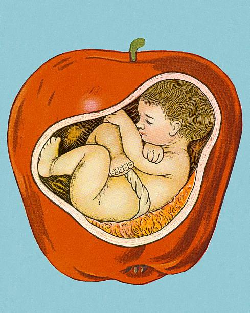 stockillustraties, clipart, cartoons en iconen met baby inside apple - alleen één jongensbaby