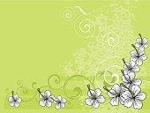 background hibiscus