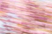 Background image of cherry blossom flowers with a diagonal motion blur effect, abstract