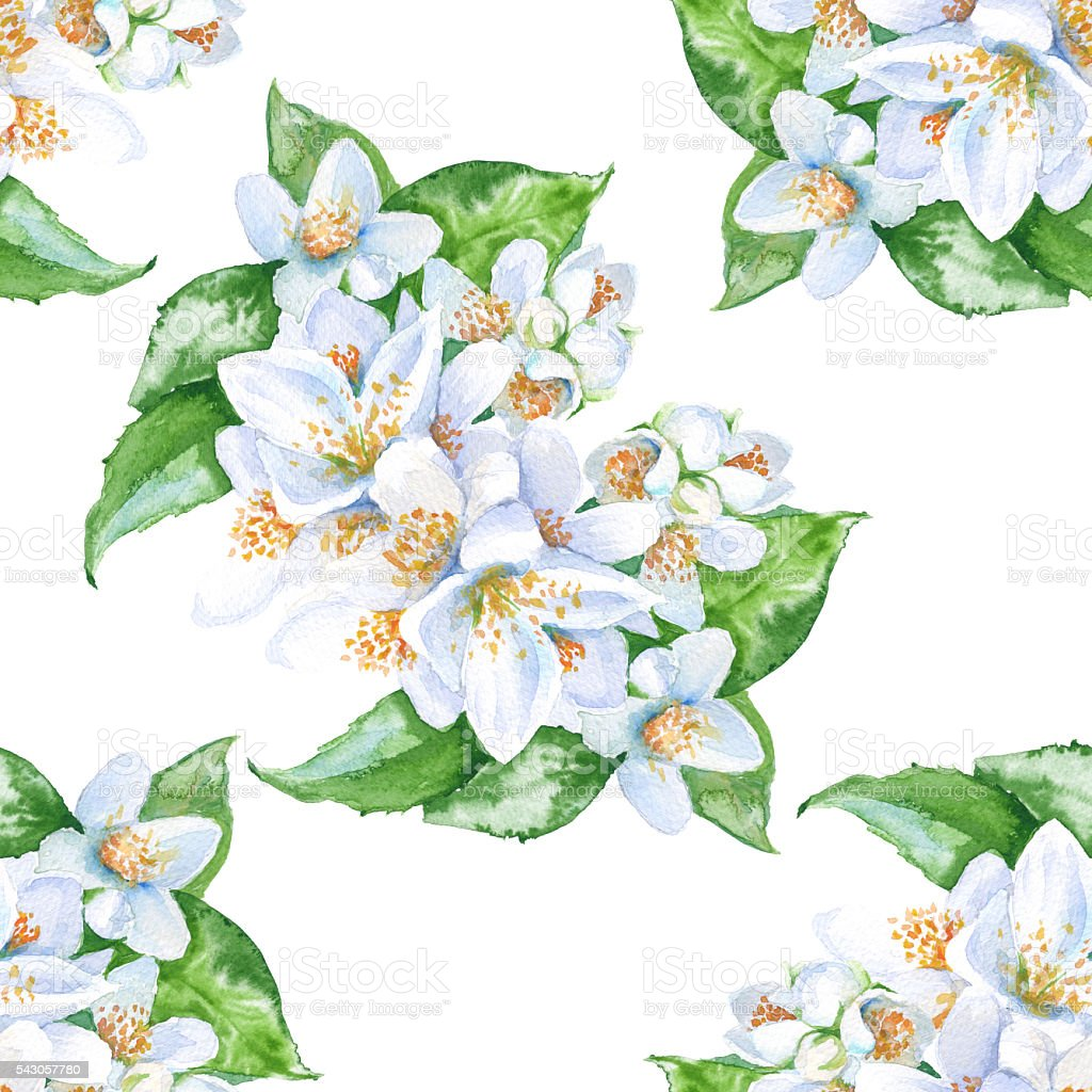 Background Jasmine Flowers Seamless Pattern Watercolor