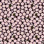 Wallpaper is an image of a spring.