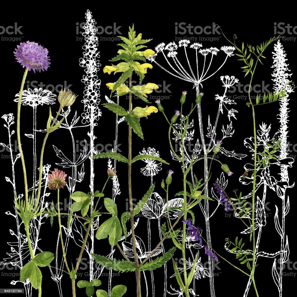 Arriereplan Avec Le Dessin Des Herbes Et Des Fleurs Cliparts