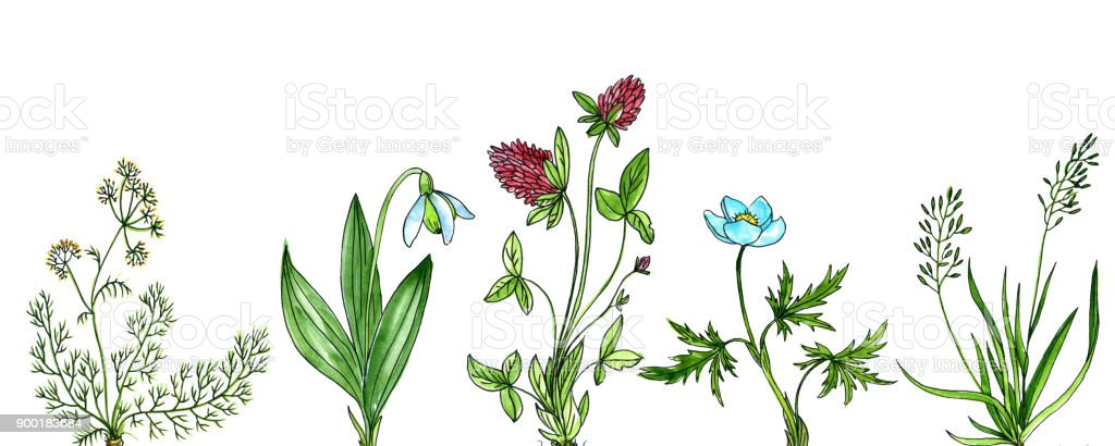 Background With Drawing Plants Royalty Free Stock Vector Art