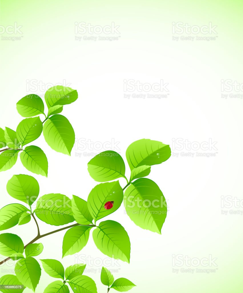background with green branch royalty-free background with green branch stock vector art & more images of backgrounds