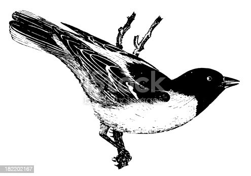 istock Baltimore oriole | Antique Bird Illustrations 182202167