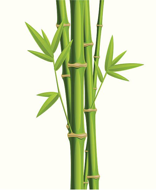 Bamboo on white vector art illustration