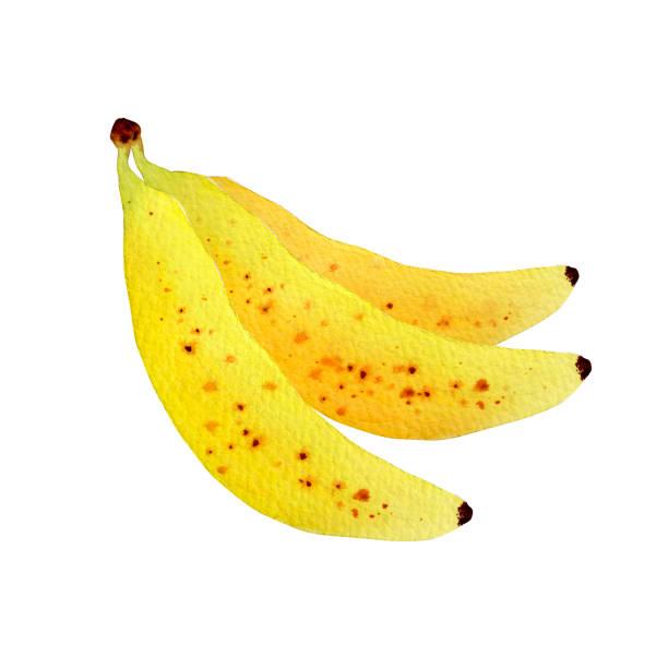 バナナ ベクターアートイラスト