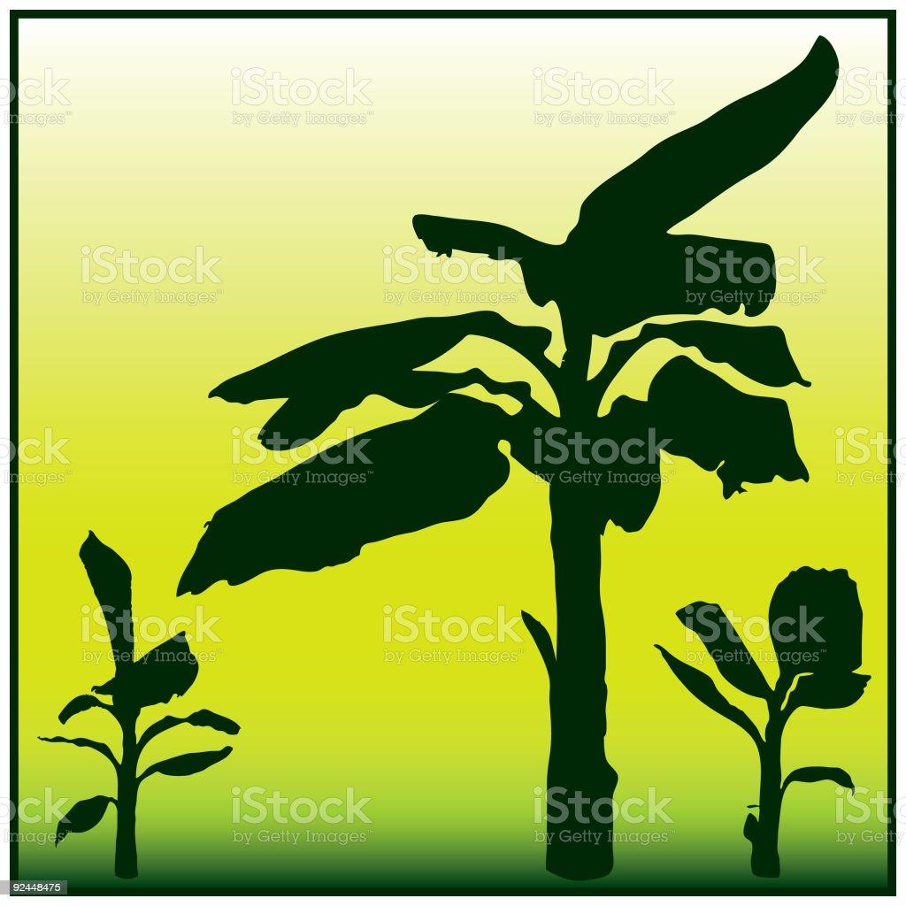Banana Tree royalty-free banana tree stock vector art & more images of african culture