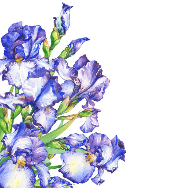 Best Greeting Card Happy Birthday With Watercolor Iris ...
