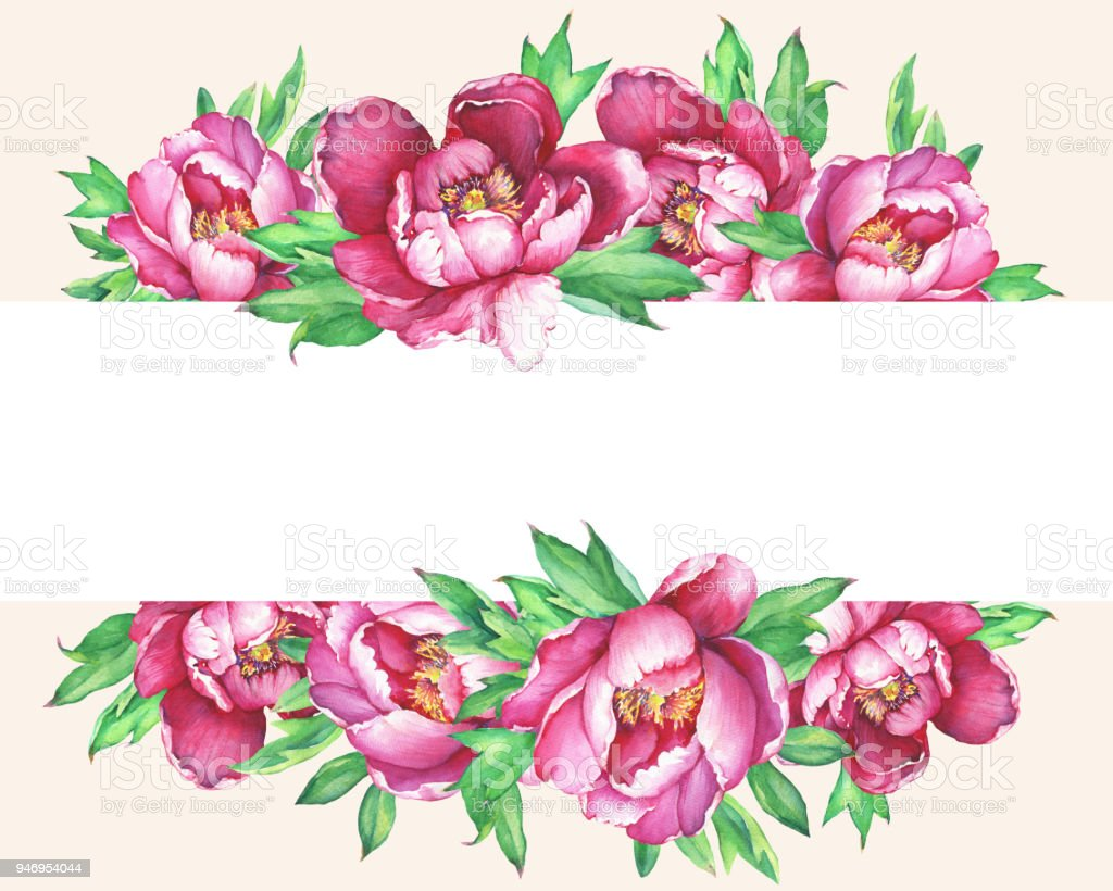 Banner With Flowering Pink Peonies Isolated On Peach Background