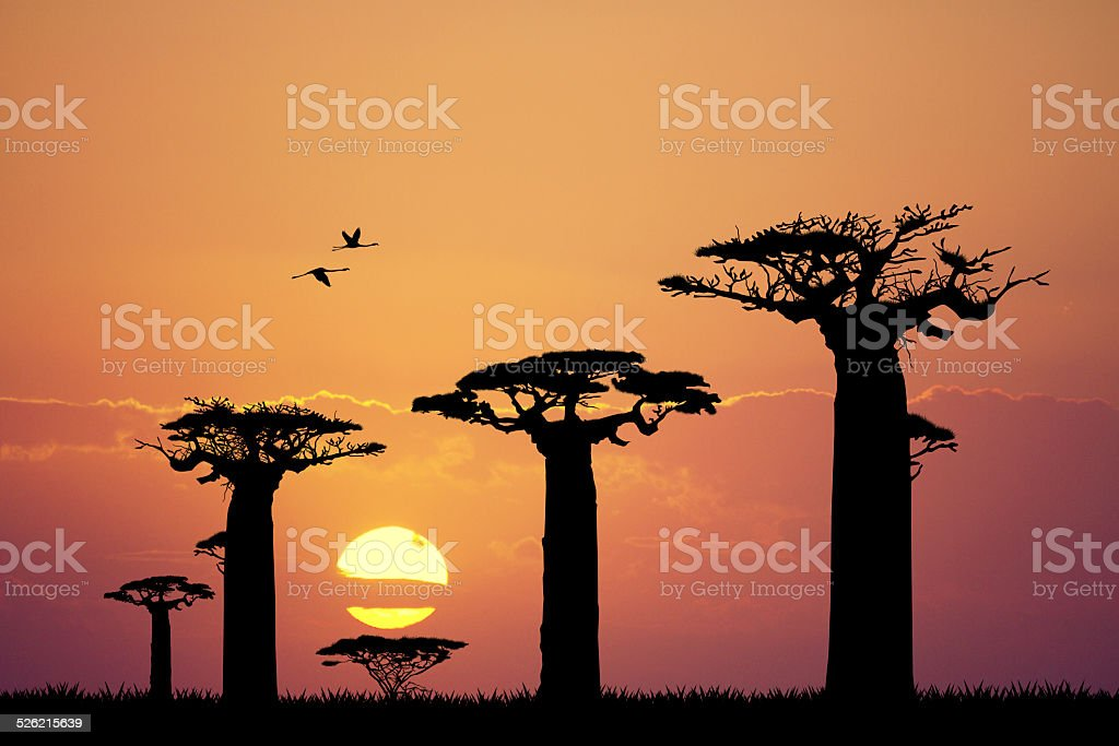 baobab silhouette at sunset vector art illustration