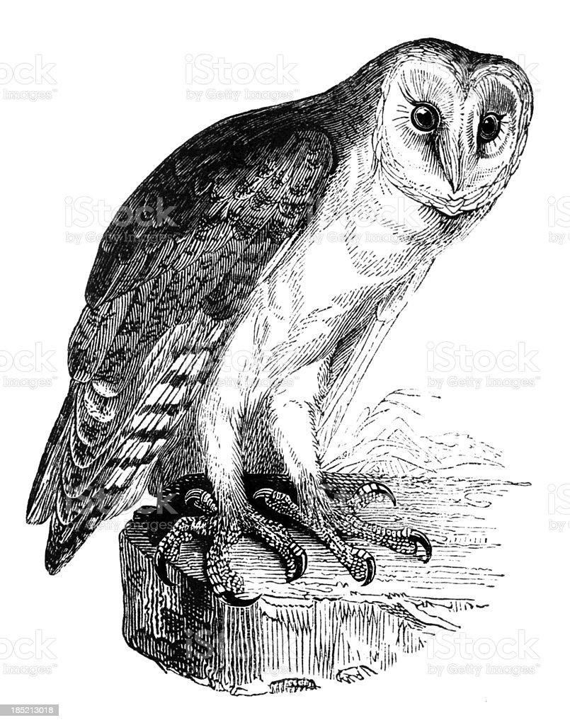 Barn Owl向量藝術插圖