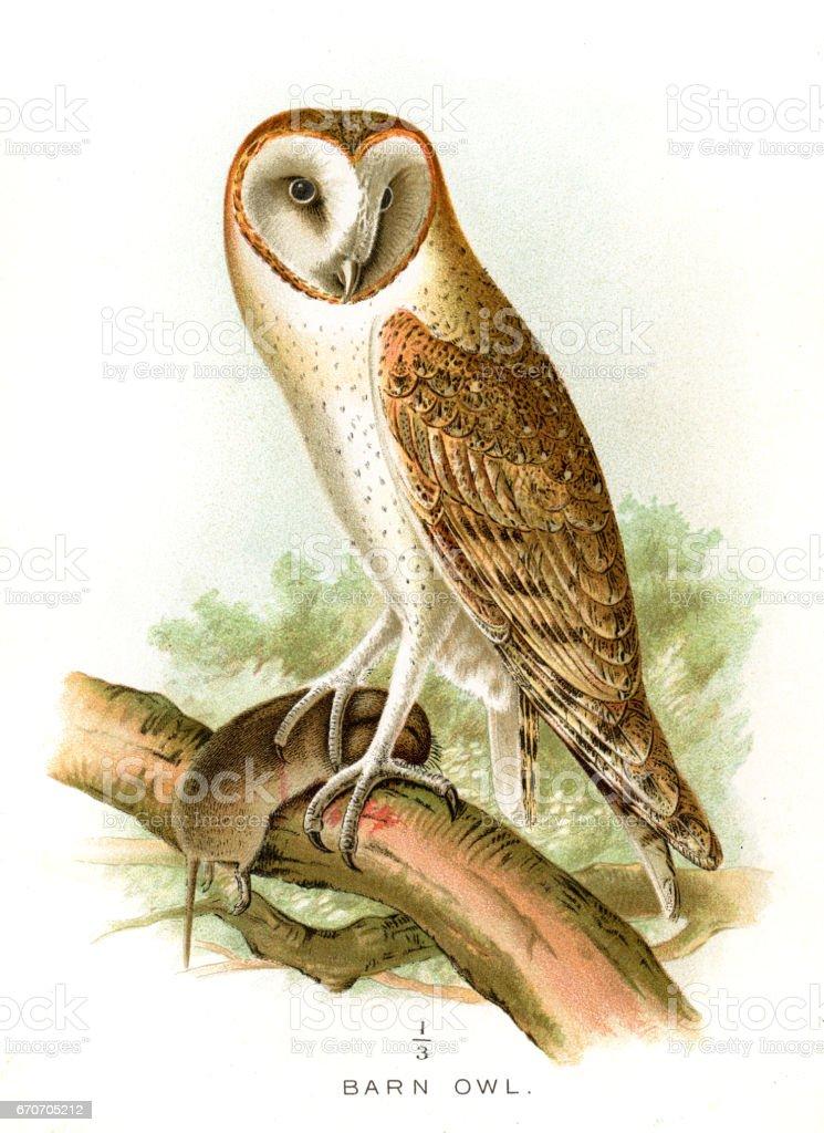倉鴞石版畫 1897向量藝術插圖