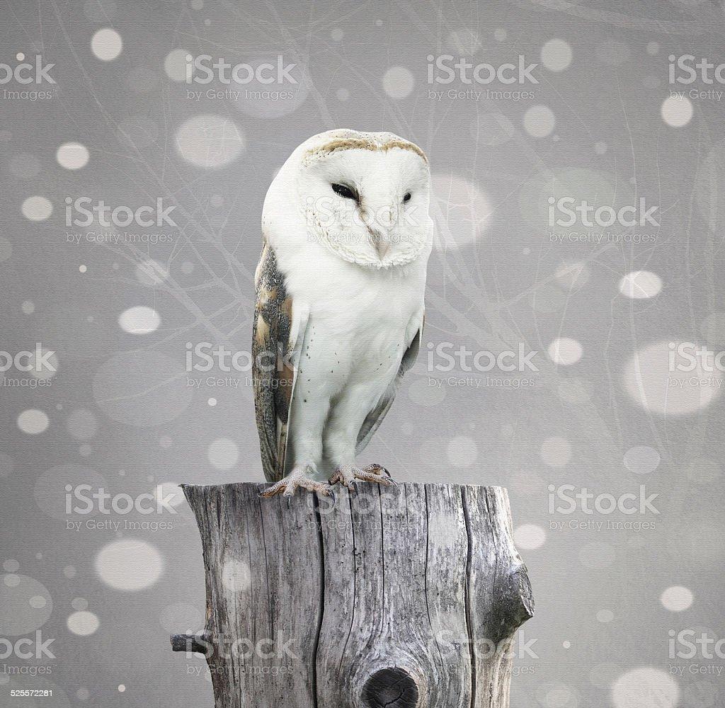 Barn Owl with snow向量藝術插圖