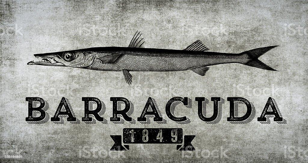 Barracuda 1849 vector art illustration