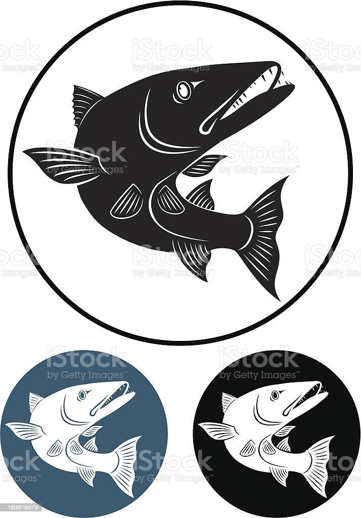 barracuda vector art illustration