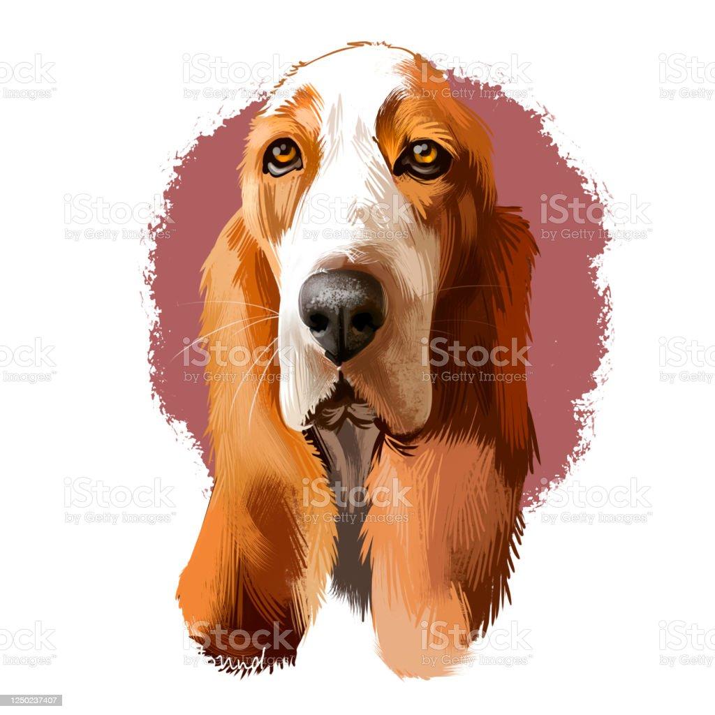 Basset Hound Or Hush Puppy Shortlegged Breed Scent Hound Family Dog Digital Art Illustration Isolated On White Background British French Origin Dog Cute Pet Hand Drawn Portrait Graphic Clip Art Stock Illustration