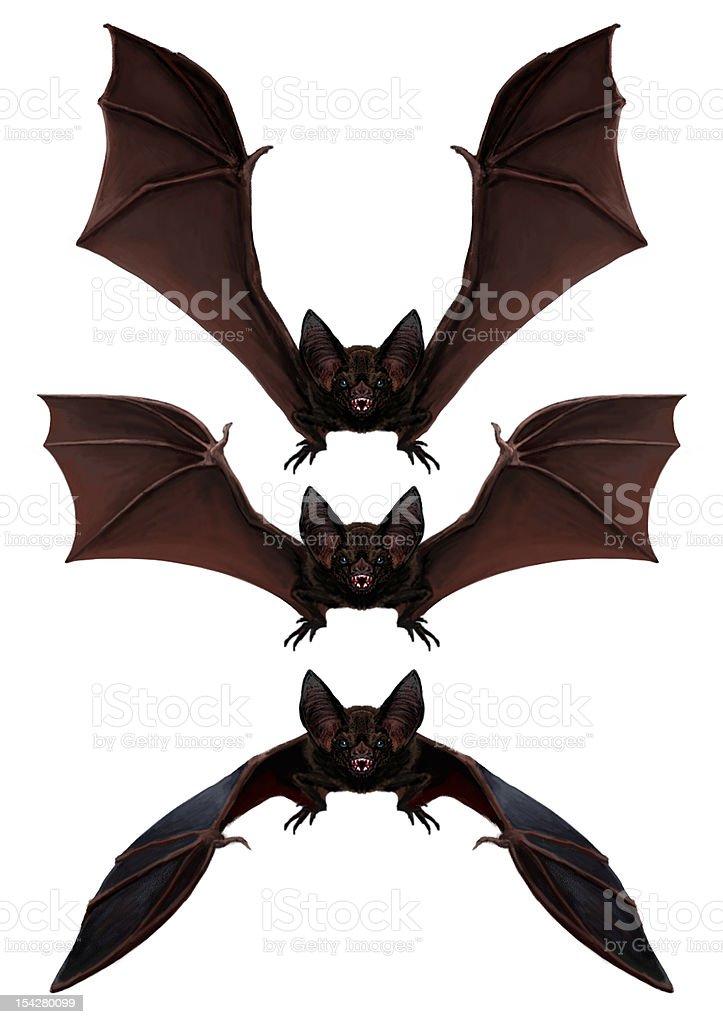 Bat is flying. 3motions. vector art illustration