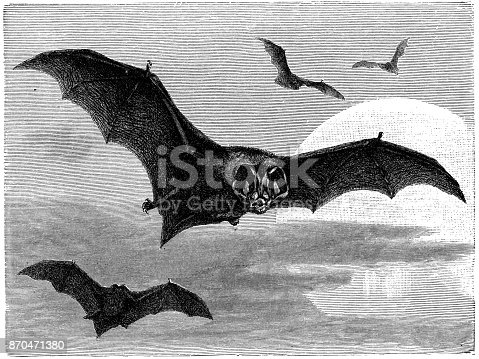 """illustration was published in 1886 """"Pittoresque"""