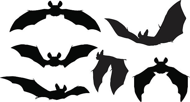 bats silhouettes - bat stock illustrations, clip art, cartoons, & icons