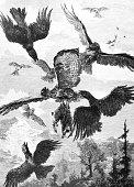 Battle for prey between birds in the clouds