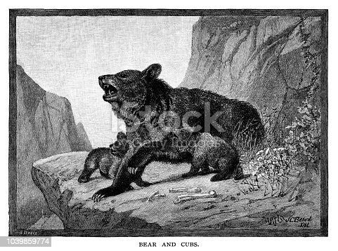 - Scanned 1881 Engraving