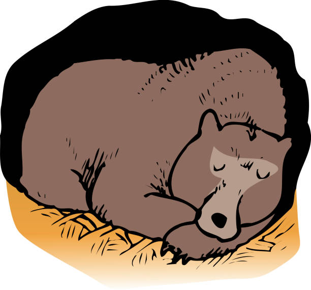 bear - hibernation stock illustrations