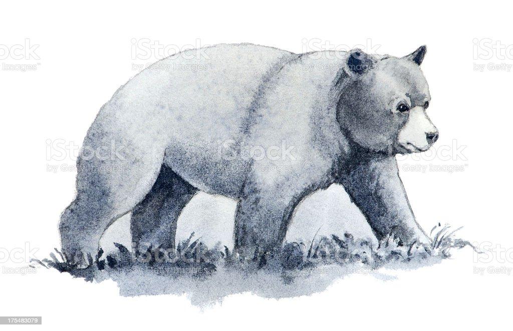 Bear on White Background vector art illustration