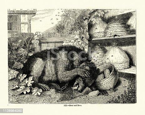 istock Bear raiding a bee hive for honey, 19th Century 1128984050