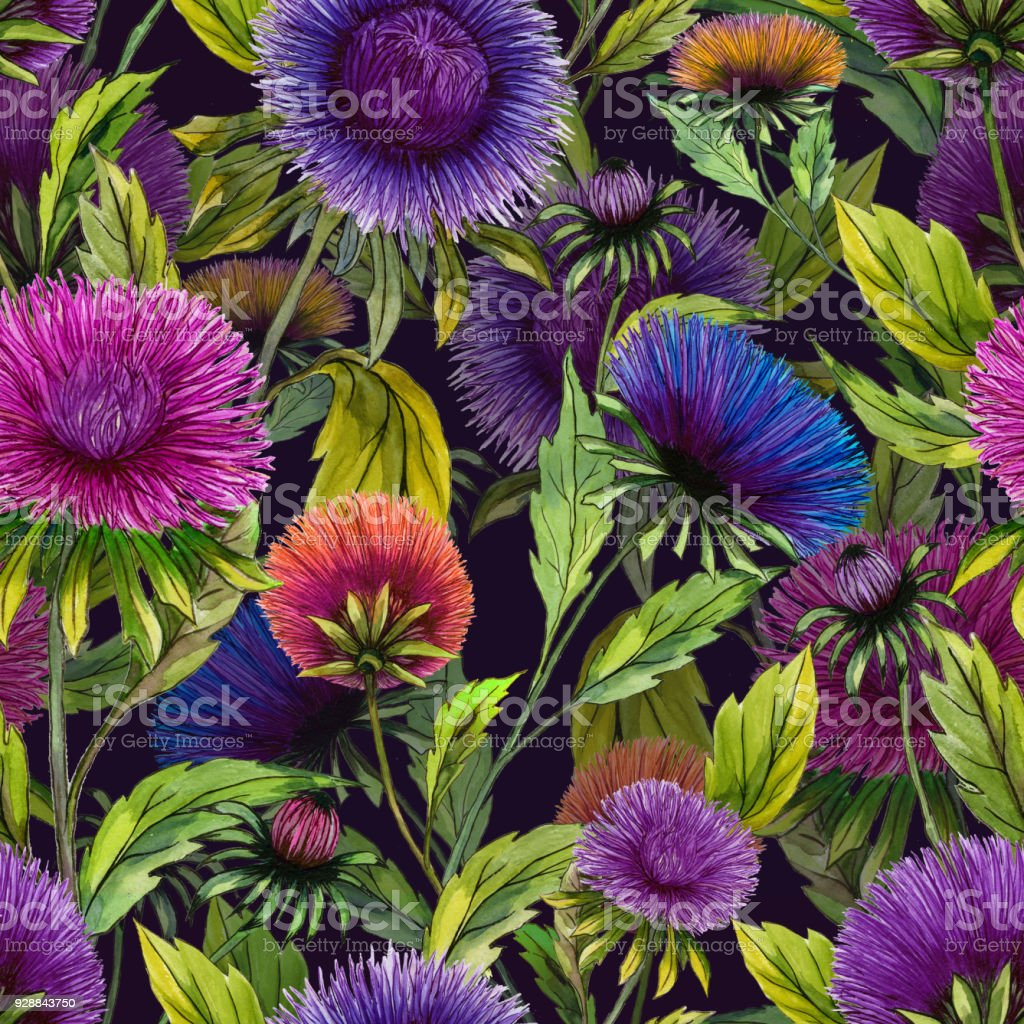 Beautiful aster flowers in different bright colors with green leaves beautiful aster flowers in different bright colors with green leaves on black background seamless floral izmirmasajfo