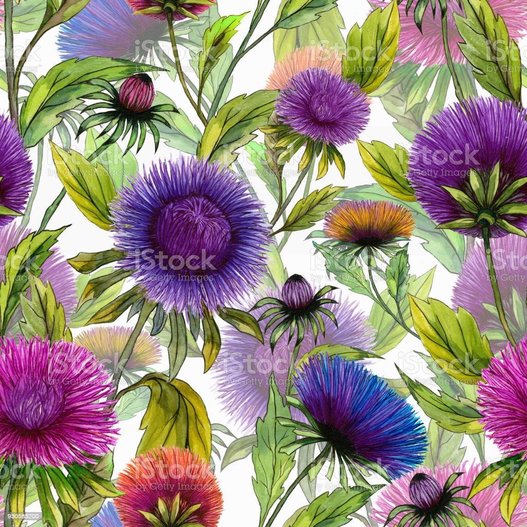 Beautiful aster flowers in different bright colors with green leaves beautiful aster flowers in different bright colors with green leaves on white background seamless floral izmirmasajfo