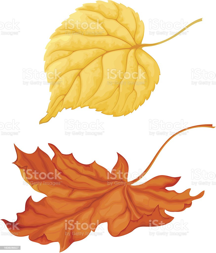 Beautiful autumn leaves maple, linden isolated on white background royalty-free stock vector art