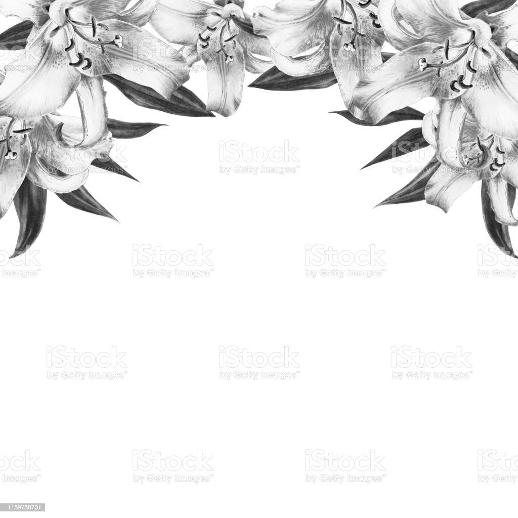 Belle Bordure Noire Et Blanche De Bord De Lis Bouquet De