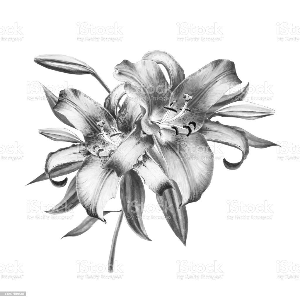 Belle Composition De Lys Noir Et Blanc Bouquet De Fleurs