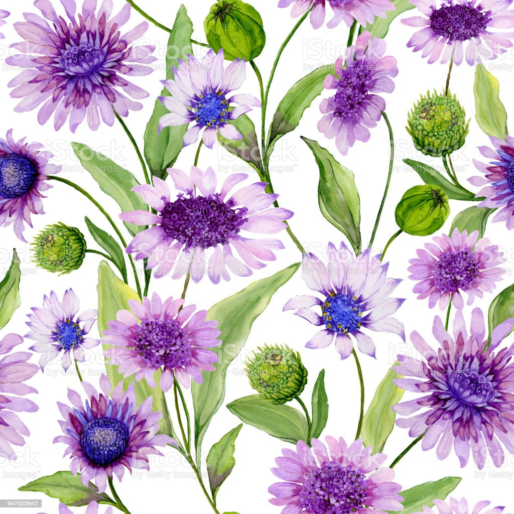 Beautiful Blue And Purple Daisy Flowers With Green Leaves On White