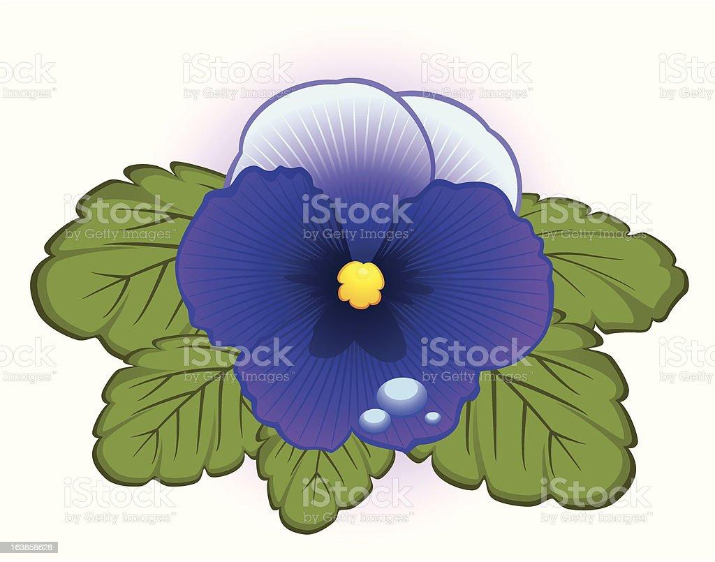 Beautiful Blue Pansy. Vector royalty-free stock vector art