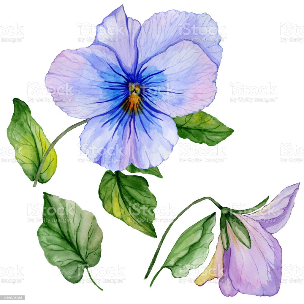 Beautiful Botanic Set Colorful Violet Flower And Green Leaves