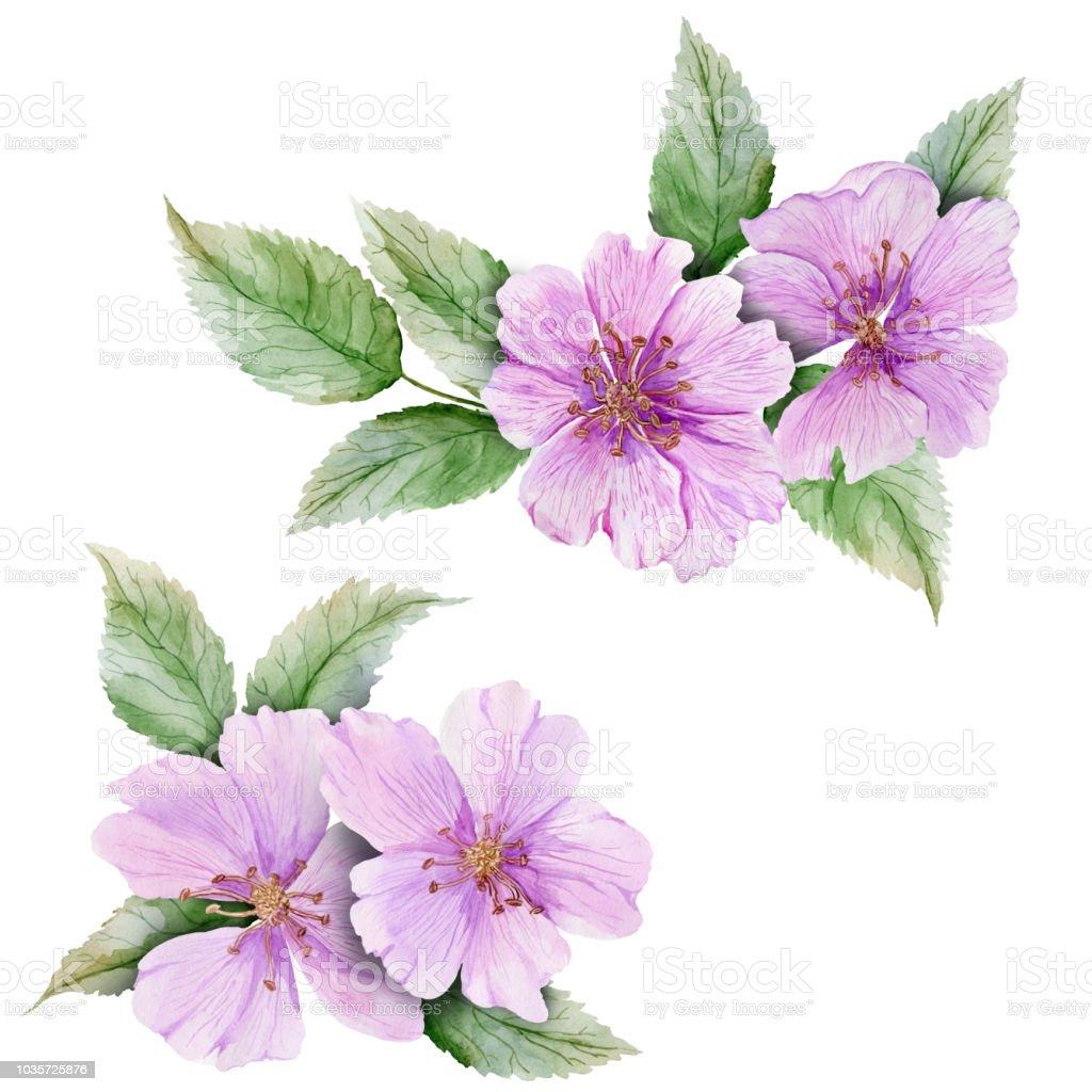 Hermoso conjunto Botánico (flores de brezo rosa con hojas).  Rosa mosqueta ramitas y aislado sobre fondo blanco. Pintura de la acuarela. - ilustración de arte vectorial