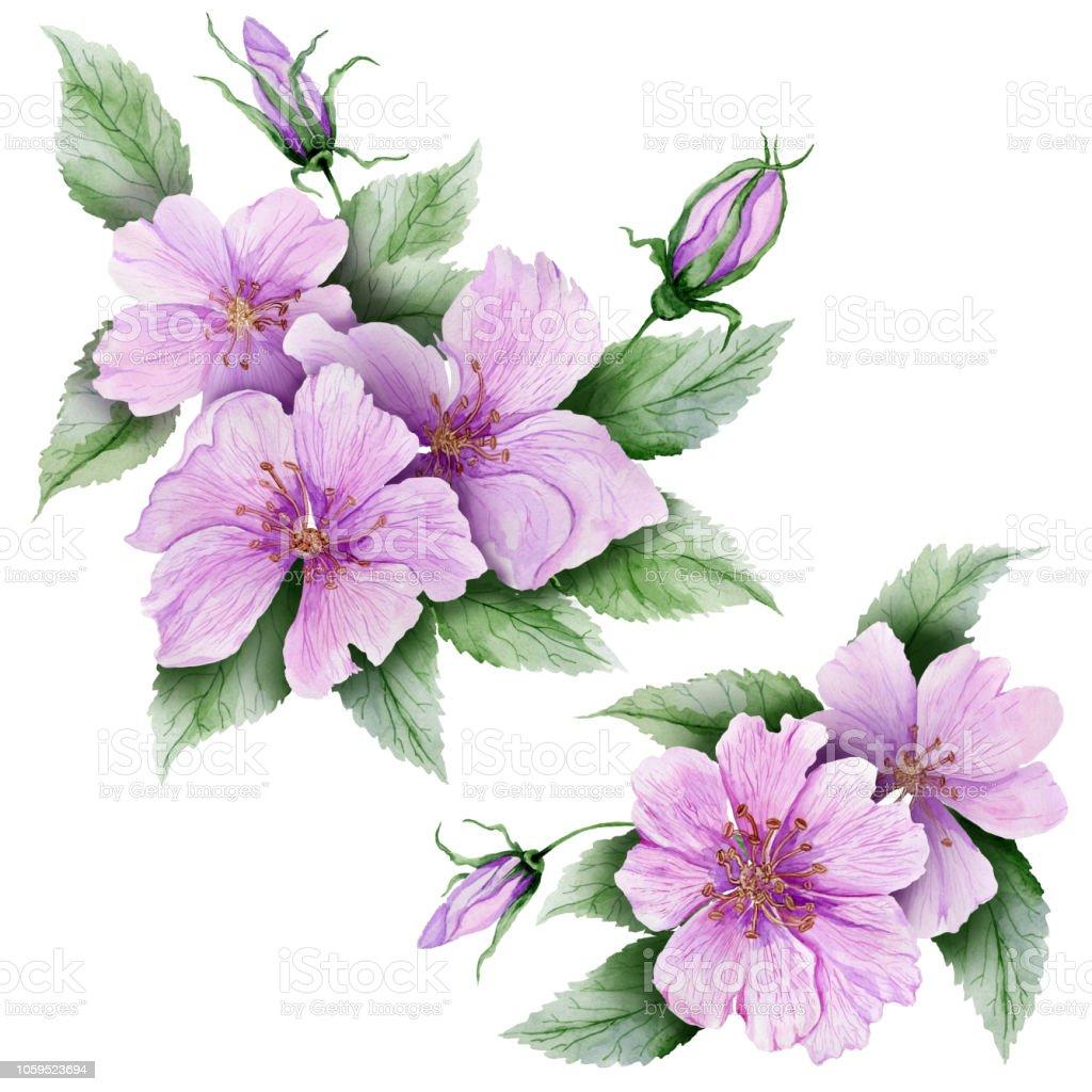 Hermoso conjunto Botánico (flores de brezo rosa con hojas y capullos cerrados).  Rosa mosqueta ramitas y aislado sobre fondo blanco. Pintura de la acuarela - ilustración de arte vectorial