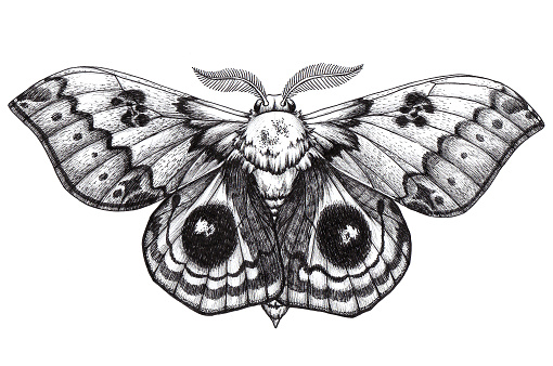 Beautiful Butterfly tattoo. Antherina suraka. Madagascar bullseye. Dotwork tattoo. Traditional black dot style ink.