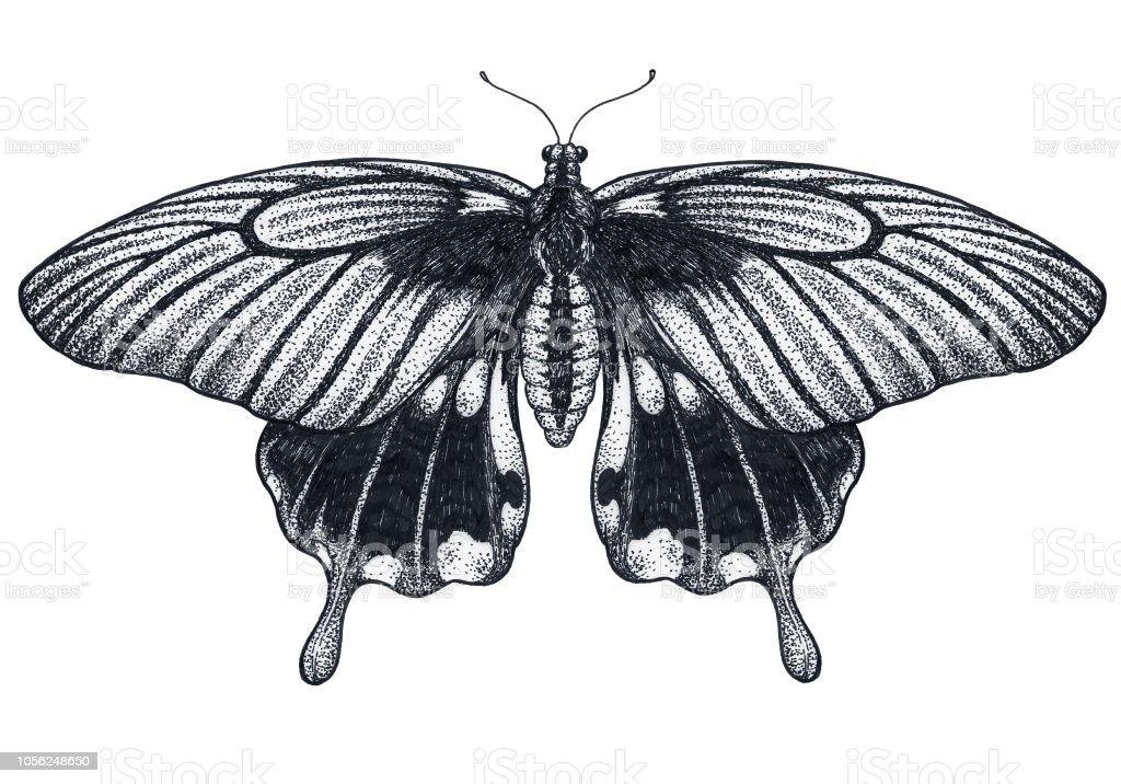 Croquis De Tatouage Papillon Magnifique Papillons Tropicaux Papilio