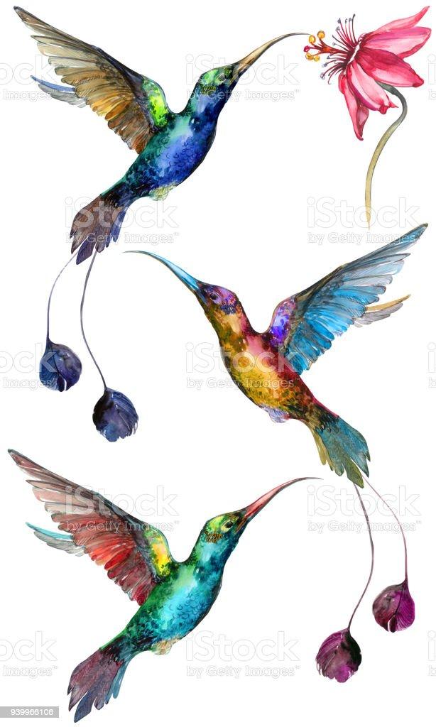 Schöne Bunte Fliegenden Kolibris Isoliert Auf Weißem Hintergrund ...