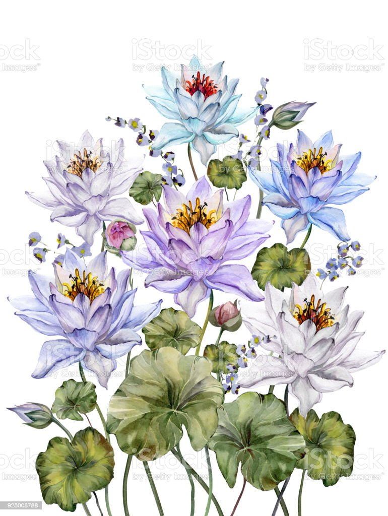 Beautiful colorful lotus flowers with leaves and bellflowers on beautiful colorful lotus flowers with leaves and bellflowers on white background floral illustration isolated mightylinksfo