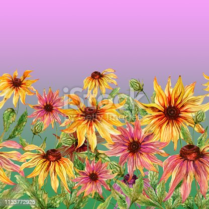 Beautiful echinacea flowers (coneflower) with green leaves on pink background. Seamless floral pattern. Watercolor painting. Hand painted illustration. Fabric, wallpaper, bed linen design.