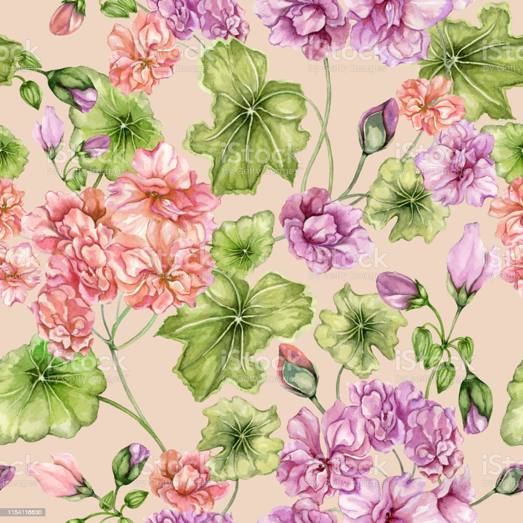 Beautiful Floral Background With Pelargonium Flowers And Leaves