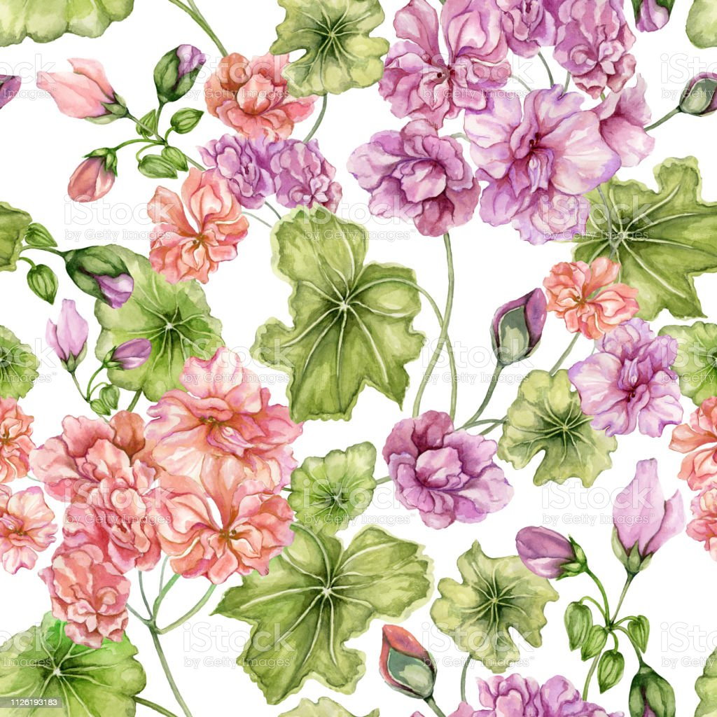 Beautiful Floral Background With Pelargonium Flowers And Leaves On