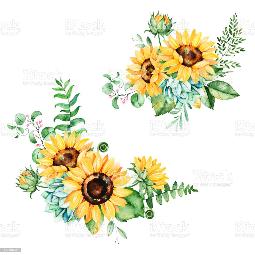 Beautiful Floral Collection With Sunflowers Royalty Free Stock Vector Art